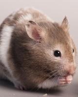 Mouse Traps, Baits & Deterrents
